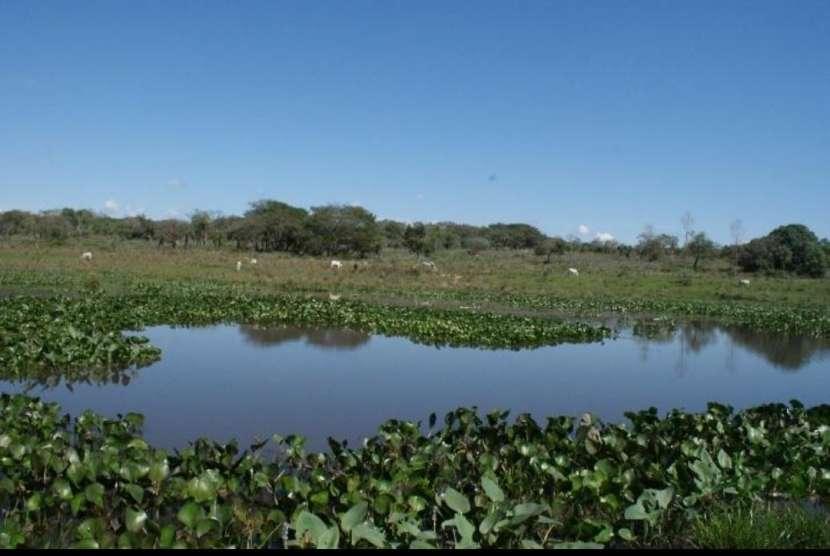 Campo 128 hectáreas en Emboscada - 3