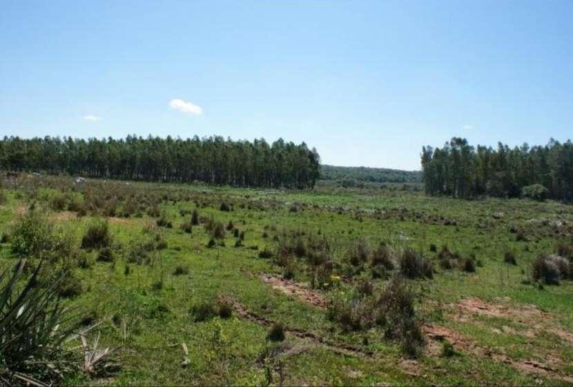 Campo 128 hectáreas en Emboscada - 4