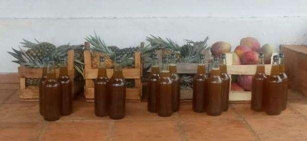 Miel orgánica y pura de Don Pablo - 0