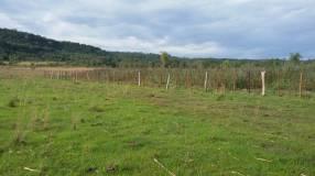 Campo de 102 hectáreas