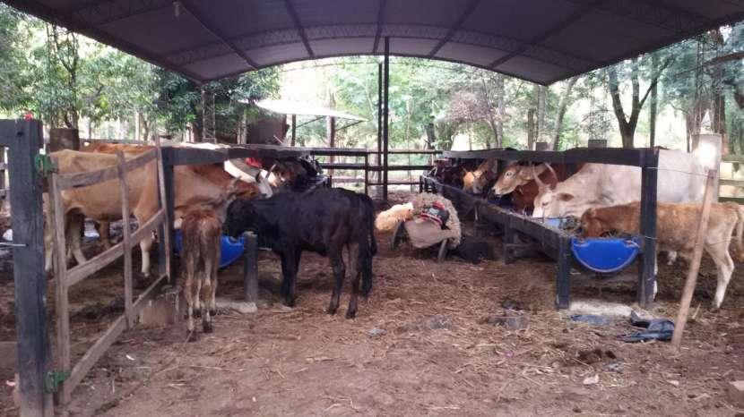Campo de 102 hectáreas - 3