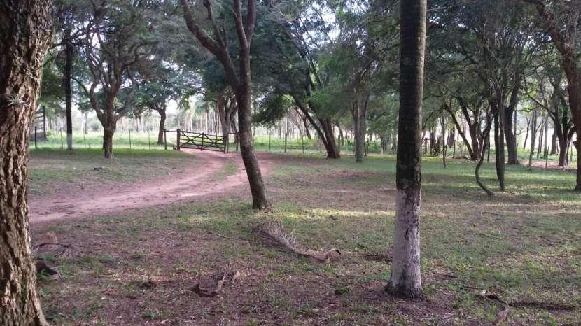 Campo de 102 hectáreas - 4