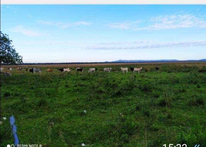 Terreno 576 has de campo natural casa patronal con arroyo - 1
