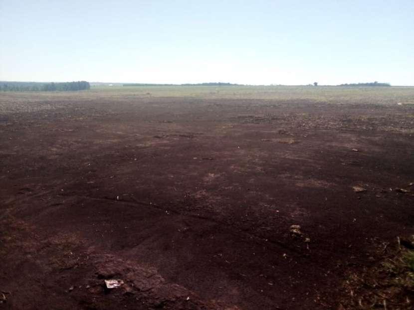 67 hectáreas en Tavapy Alto Paraná - 1