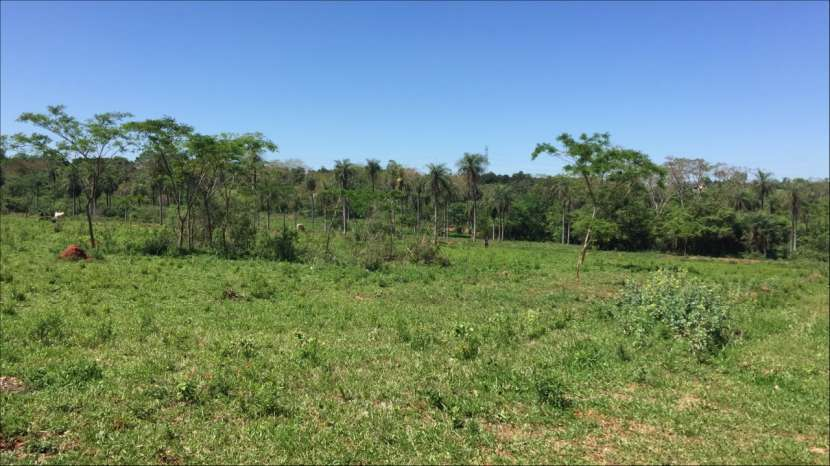 5 terrenos juntos en J. Augusto Saldivar a 30 mts del asfalto - 4