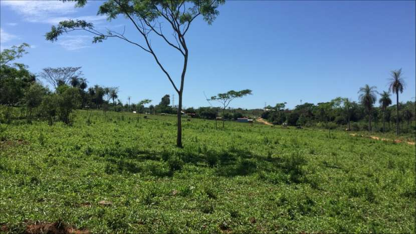 5 terrenos juntos en J. Augusto Saldivar a 30 mts del asfalto - 3