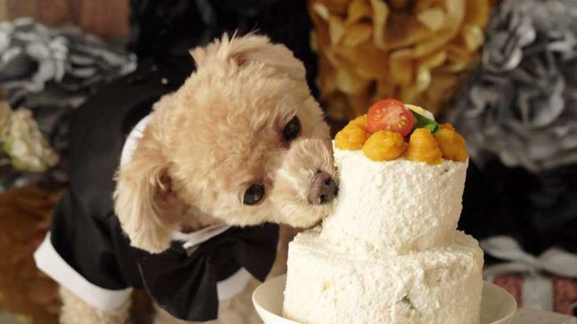 Recetario Canino y Felino preparaciones snacks y demás - 2