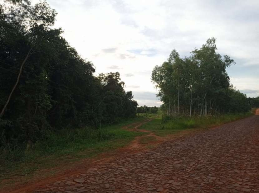19,3 hectárea en Santa Rita Alto Paraná - 0