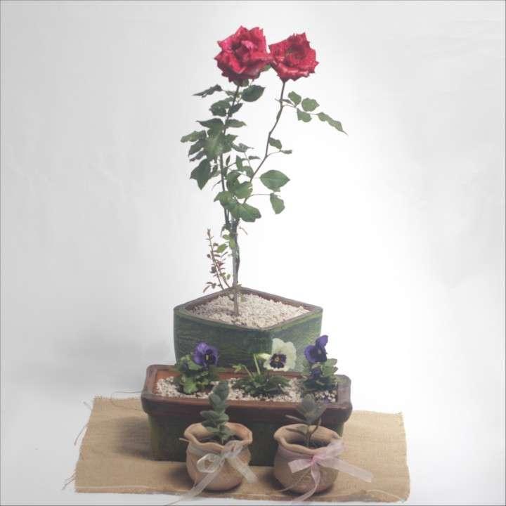 Combo rosa + pensamientos + suculentas, especial para mamá - 2