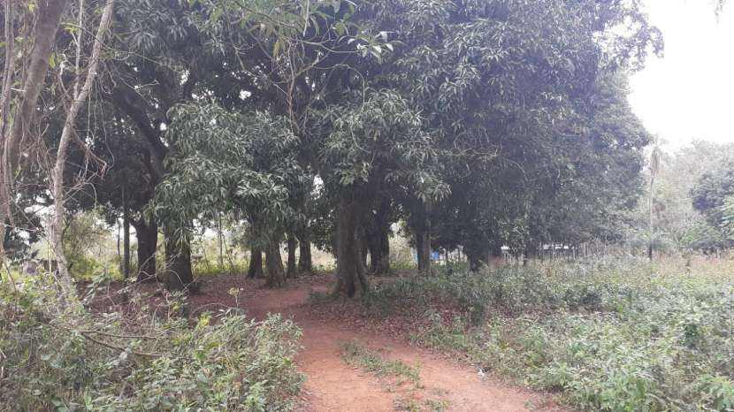 Terreno de 18 hectáreas en Ypacaraí - 2