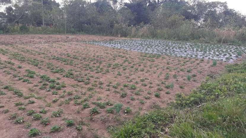 Terreno de 18 hectáreas en Ypacaraí - 4