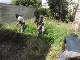 Servicio de limpieza de patios jardinería en general - 1