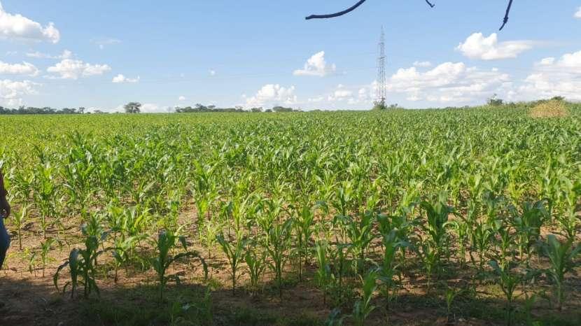 81 hectáreas aptas para agricultura y ganadería - 2