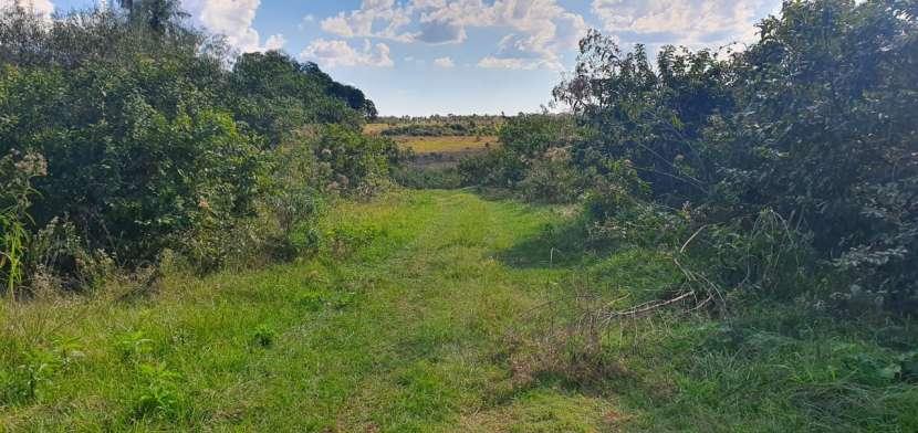 81 hectáreas aptas para agricultura y ganadería - 4