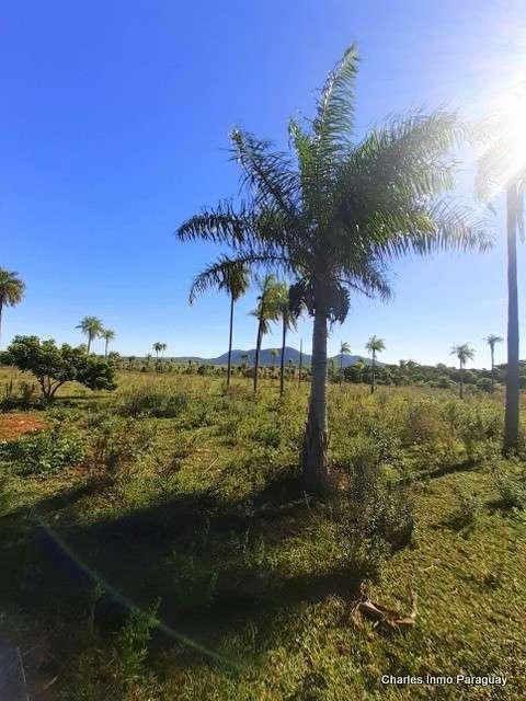 Estancia 30 hectáreas en Acahay - 1
