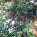 Estancia 30 hectáreas en Acahay - 2