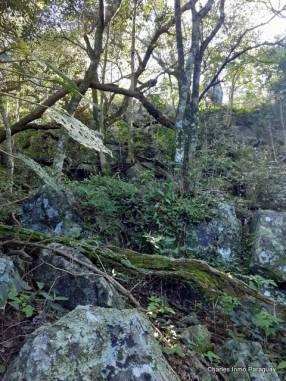 Terreno 6.2 hectáreas en Acahay