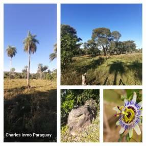 Terreno 10 hectáreas en Acahay