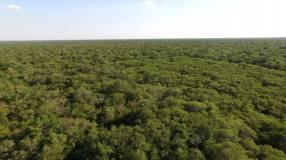 Campo en el Chaco Presidente Hayes