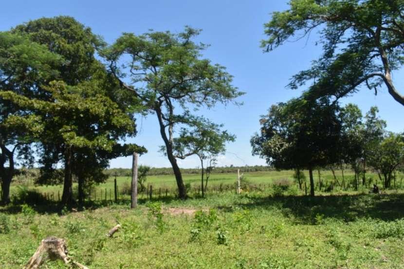 Terreno de 311 hectáreas en zona de Loreto Concepción - 6