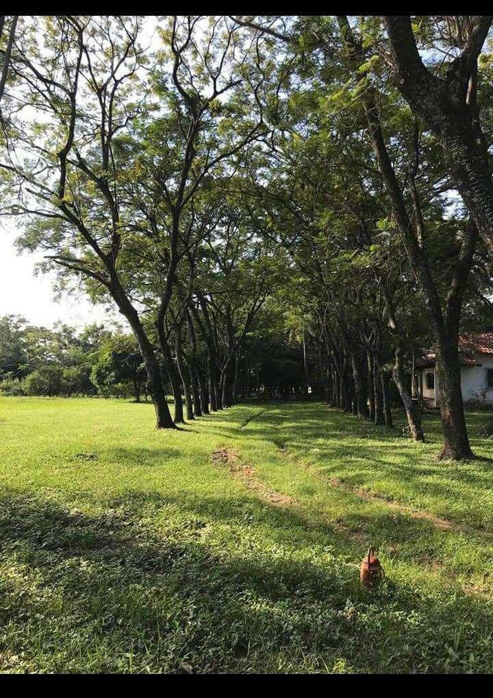 Terreno con casa quinta en Limpio - 5