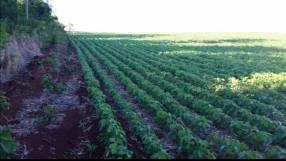 Terreno de 367 hectáreas en Santa Rita