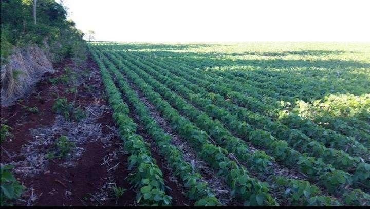 Terreno de 367 hectáreas en Santa Rita - 0