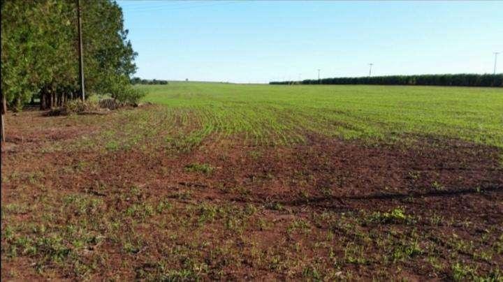 Terreno de 367 hectáreas en Santa Rita - 1