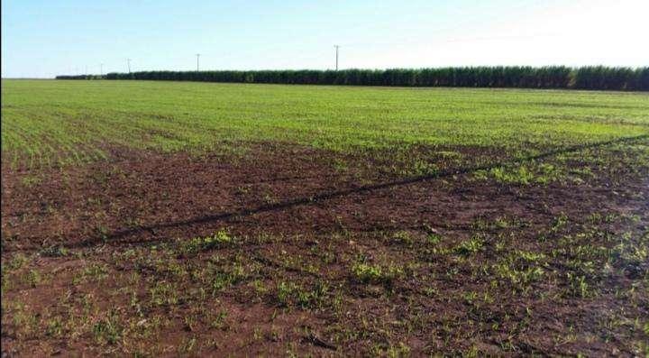 Terreno de 367 hectáreas en Santa Rita - 2