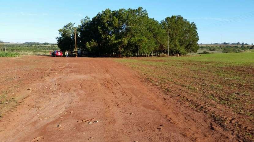 Terreno de 367 hectáreas en Santa Rita - 5