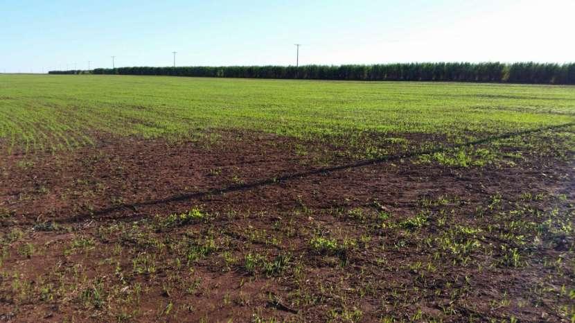 Terreno de 367 hectáreas en Santa Rita - 6
