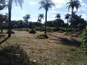 Limpieza de terreno y patios baldíos