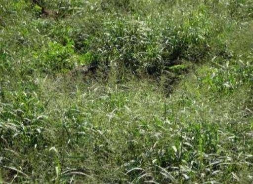 61.923 hectáreas en Alto Paraguay - 0