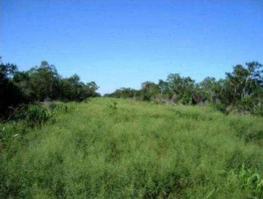 61.923 hectáreas en Alto Paraguay - 1