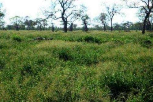 61.923 hectáreas en Alto Paraguay - 2