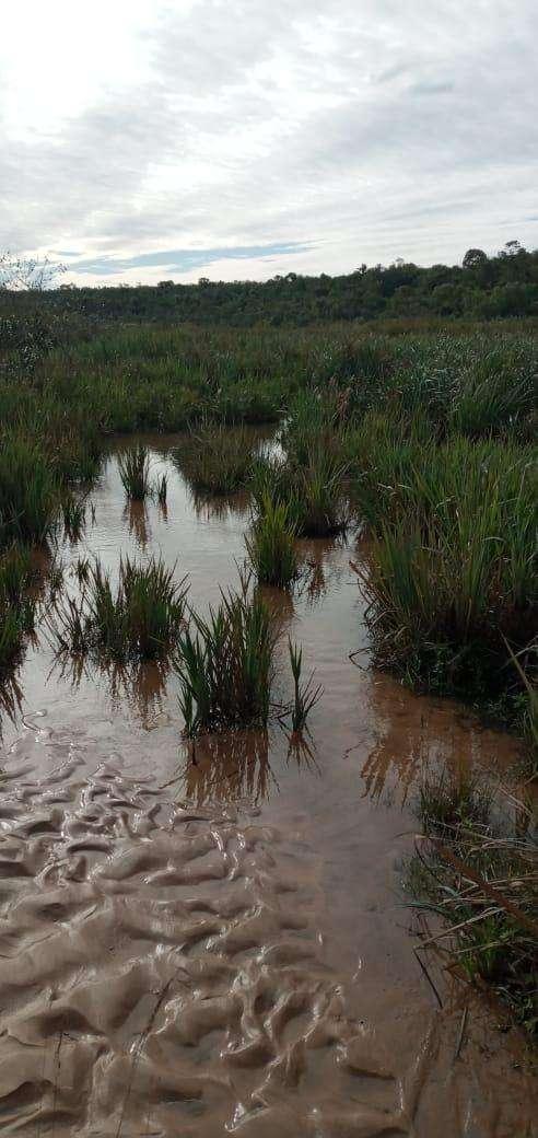 Terreno de 90 hectáreas - 4