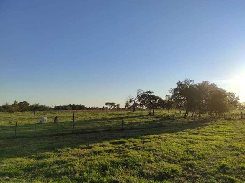 Terreno de 60 hectáreas en Hugua Rivas Concepción - 7
