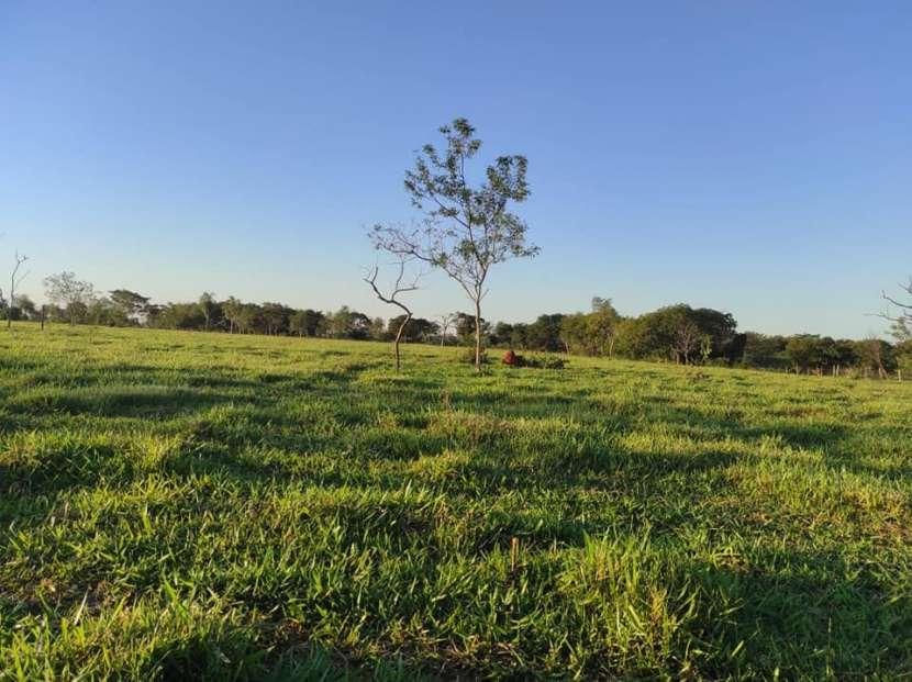 Terreno de 60 hectáreas en Hugua Rivas Concepción - 6