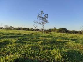 Terreno de 60 hectáreas en Hugua Rivas Concepción