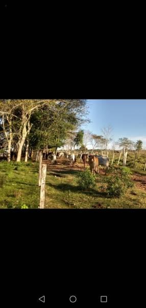 60 hectáreas en RI 3 Corrales Coronel Oviedo