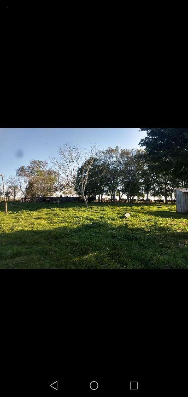 60 hectáreas en RI 3 Corrales Coronel Oviedo - 1