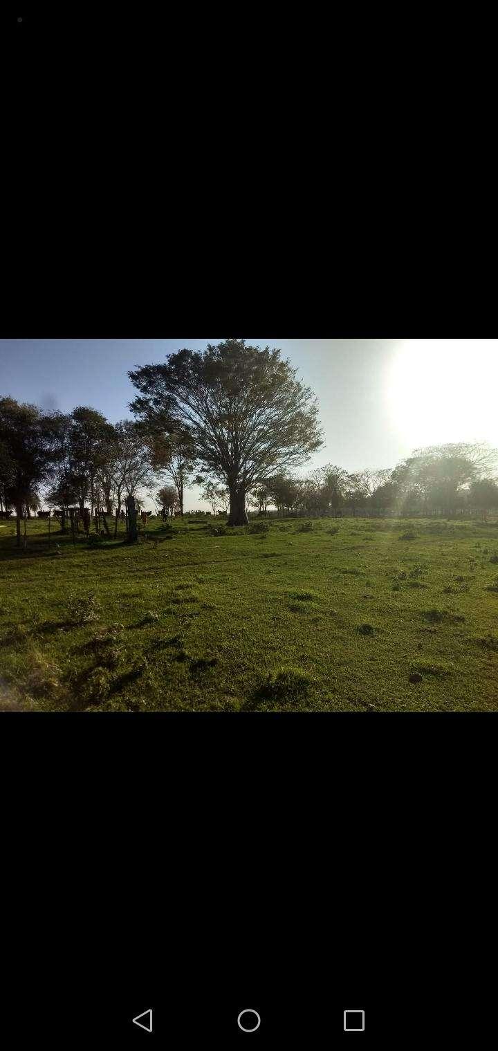 60 hectáreas en RI 3 Corrales Coronel Oviedo - 2