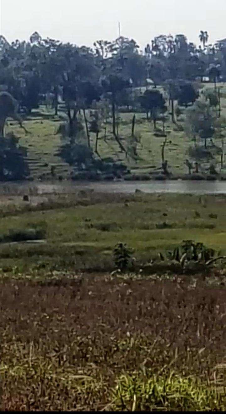 8.7 hectáreas en km 16 Acaray - 2
