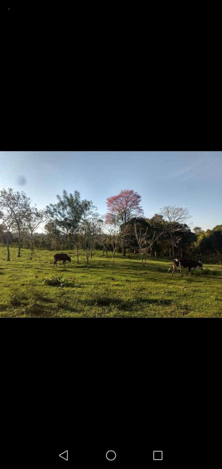 60 hectáreas en RI 3 Corrales Coronel Oviedo - 3