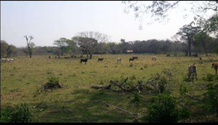 240 hectáreas en RI 3 Corrales - 3