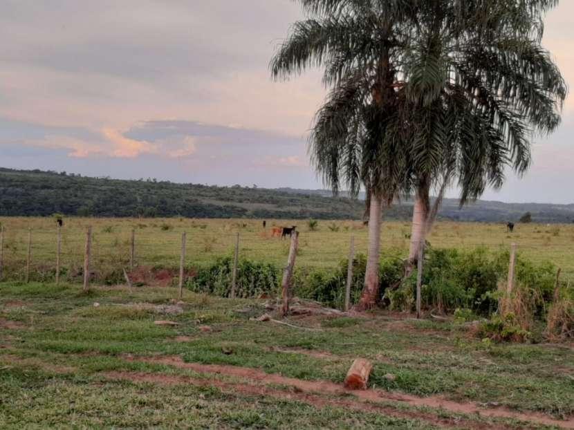 Campo de 230 hectáreas en Santa Rosa del Mbutuy - 1