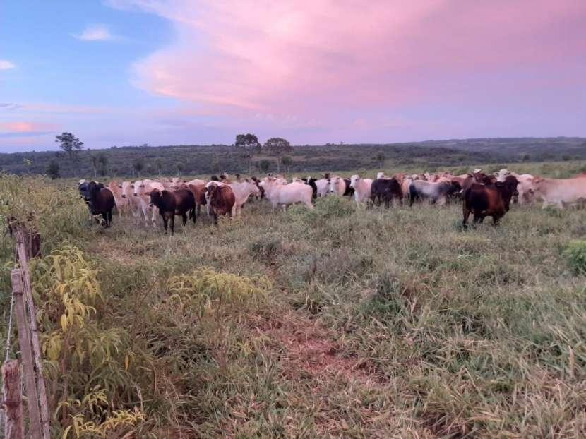 Campo de 230 hectáreas en Santa Rosa del Mbutuy - 3