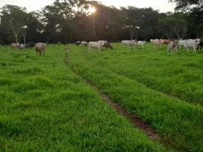 Campo de 230 hectáreas en Santa Rosa del Mbutuy