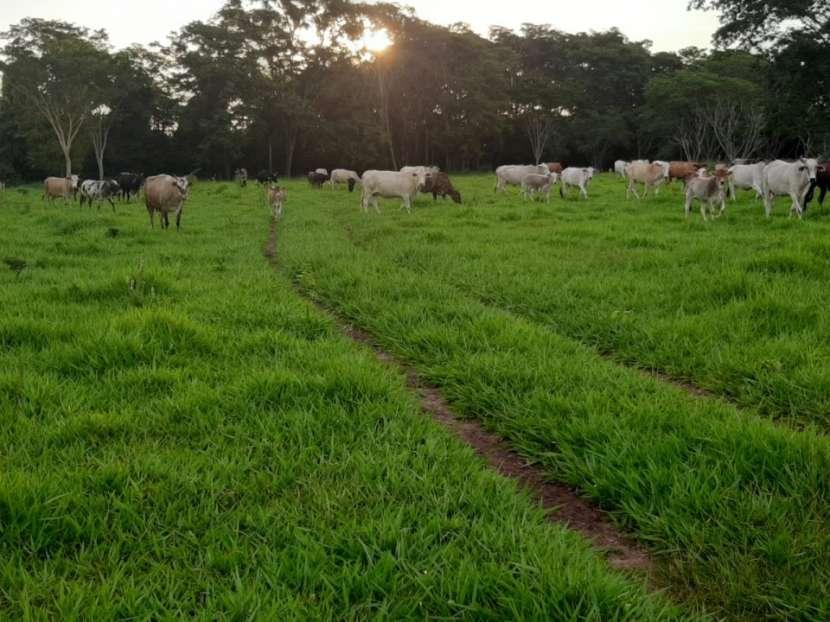 Campo de 230 hectáreas en Santa Rosa del Mbutuy - 0