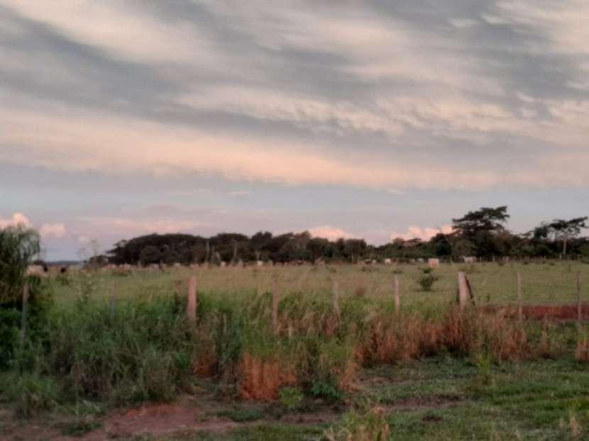 Campo de 230 hectáreas en Santa Rosa del Mbutuy - 2